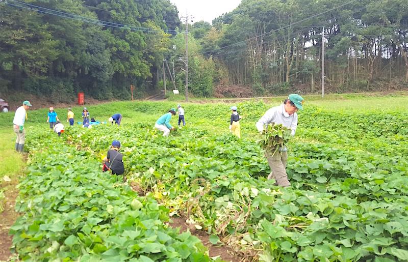 隊集会~スカウト農園草取り(8月)