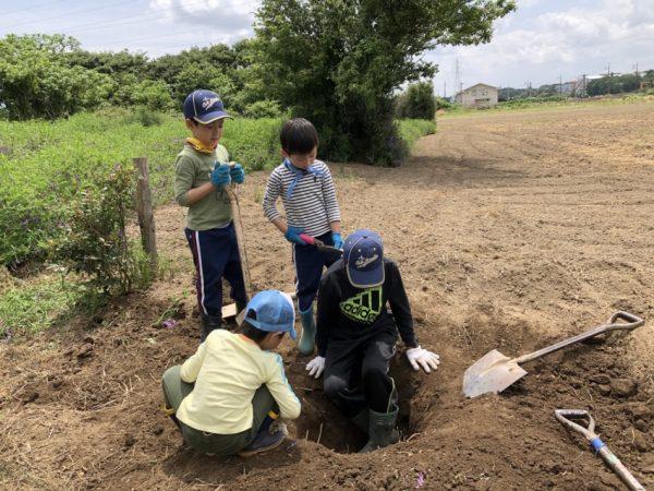 新しい農園の整備